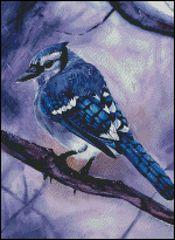 Blue Jay - HS