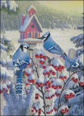Winter Blue Jays