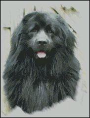 Balou - Newfoundland Dog