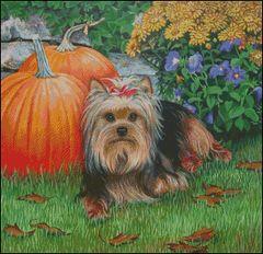 Harvest Pup