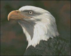 American Bald Eagle - BL
