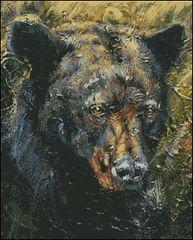 The Bear Stare