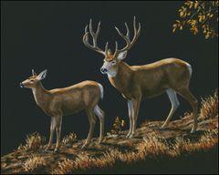 Mule Deer Ridge