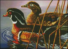 2 Beautiful Wood Ducks
