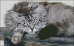Tired Silver Tabby Cat