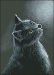 Shaft of Light - Cat