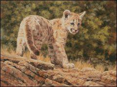 Blue Eyes Cougar Cub