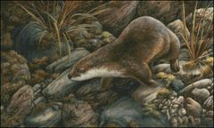 Otter Study