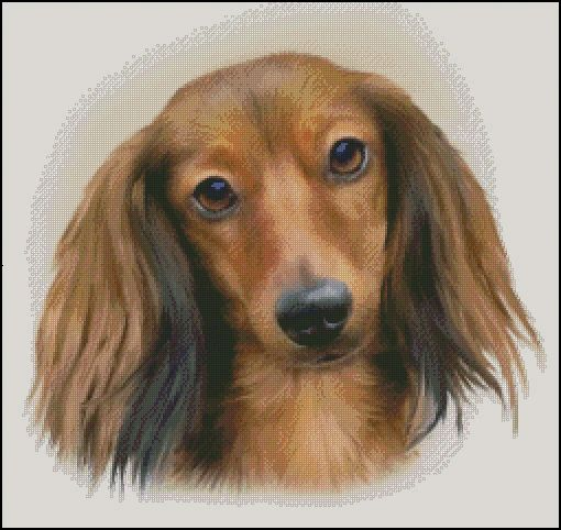 Red Longhaired Dachshund Counted Cross Stitch Pattern