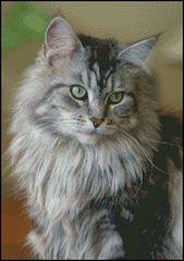 Silver Tabby Cat Portrait