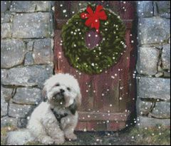 Lhasa Apso in the Snow