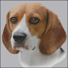 Beagle NB
