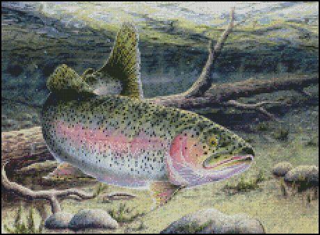 Rainbow Trout Counted Cross Stitch Pattern Shinysun S