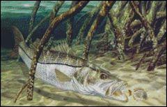 Mangrove Monster