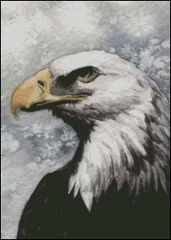 Bald Eagle -MW