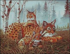 Bobcat and Cubs