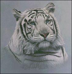 White Tiger - Blue Sapphires