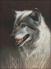 Sundance - Timber Wolf