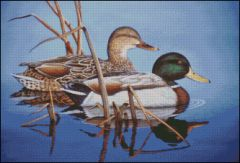 Blue Water Mallards