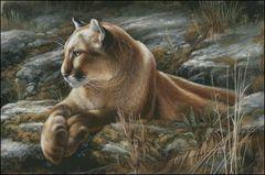 Contemplation Cougar