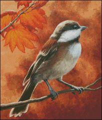 Autumn Chickadee - CF