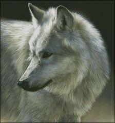 White Wolf - RL