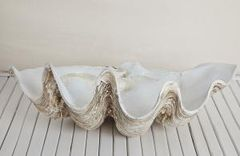 Vintage Clam Shell- Medium