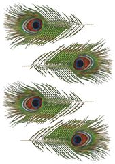 Three sheets of four edible wafer paper peacock feathers