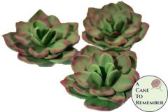 "Three 2 1/2"" unwired gumpaste succulents for cake decorating, cupcake decorating, or DIY wedding cakes"