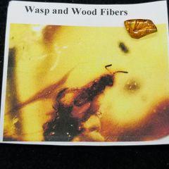 #0901 North Carolina Cretaceous Wasp in amber