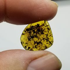 #0909 Huge 8mm Cretaceous age spider in amber