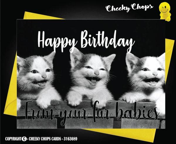 Birthday Card Cats Kittens Fur Babies C52 Cheeky Chops Cards