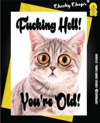 Birthday Card - Fucking How Old Cats Kittens C53