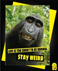 Life is too short to be normal stay weird Animal07