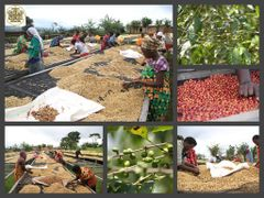 Rwanda Karongi Gitesi - Micro Lot