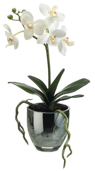 Phalaenopsis Orchid Plant Wleaf In Mercury Glass Vase All Silks Etc