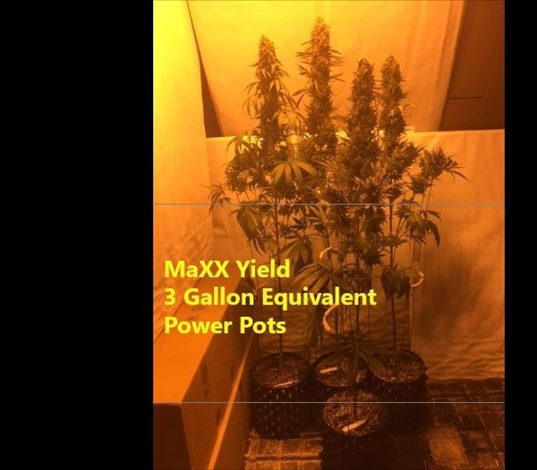 Best Growing Container - MaXX Yield   MaXX Yield