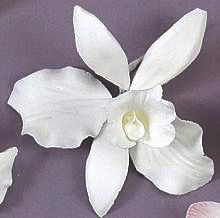Orchid White 4 inch Edible Gumpaste Flower 2 piece