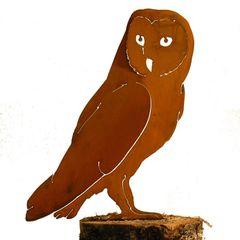 B728 Barn Owl