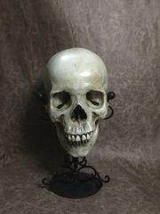Female Real Human Skull Replica