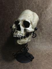 Elongated Peruvian Real Human Skull Replica Painted by Zane Wylie