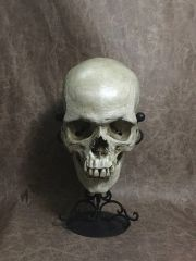 Male Real Human Skull Replica