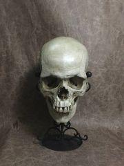 Male Real Human Skull Replica