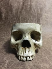 Food Safe Female Real Human Skull Replica Bowl Skull Chalice by Zane Wylie