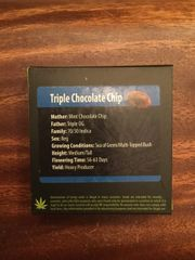 Triple chocolate OG