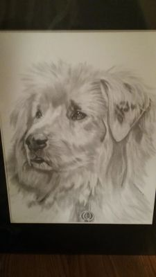 Children's Dog Books & Pet Portraits