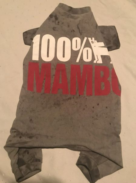 100% Mambo - Standard Small