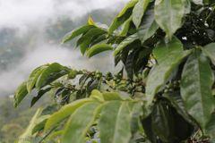 Guatemala SHB -Villa Herminia
