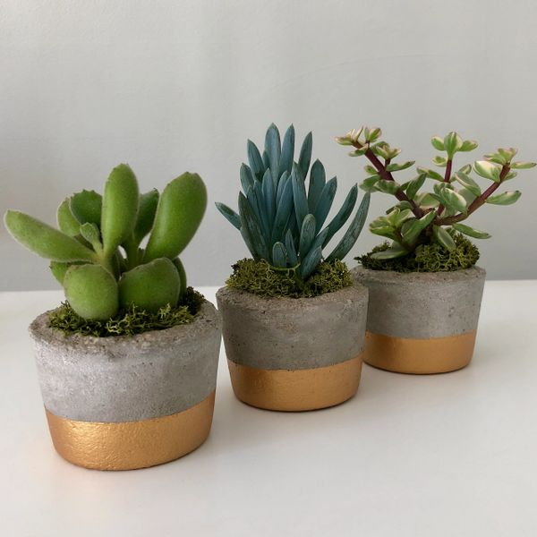 trio of concrete rustic cactus succulent pots with without plants green living. Black Bedroom Furniture Sets. Home Design Ideas