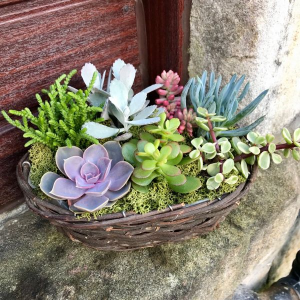 Succulent Willow Basket Kit